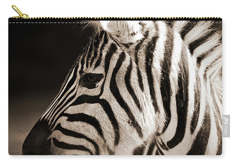 Black Color Carry-all Pouch featuring the photograph Portrait Of A Young Zebra by Cruphoto