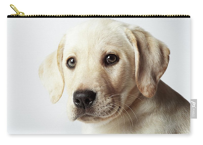 White Background Carry-all Pouch featuring the photograph Portrait Of Blond Labrador Retriever by Uwe Krejci