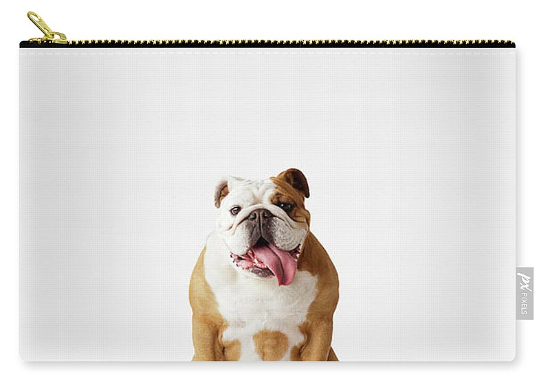 Pets Carry-all Pouch featuring the photograph Portrait Of British Bulldog Sitting by Compassionate Eye Foundation/david Leahy