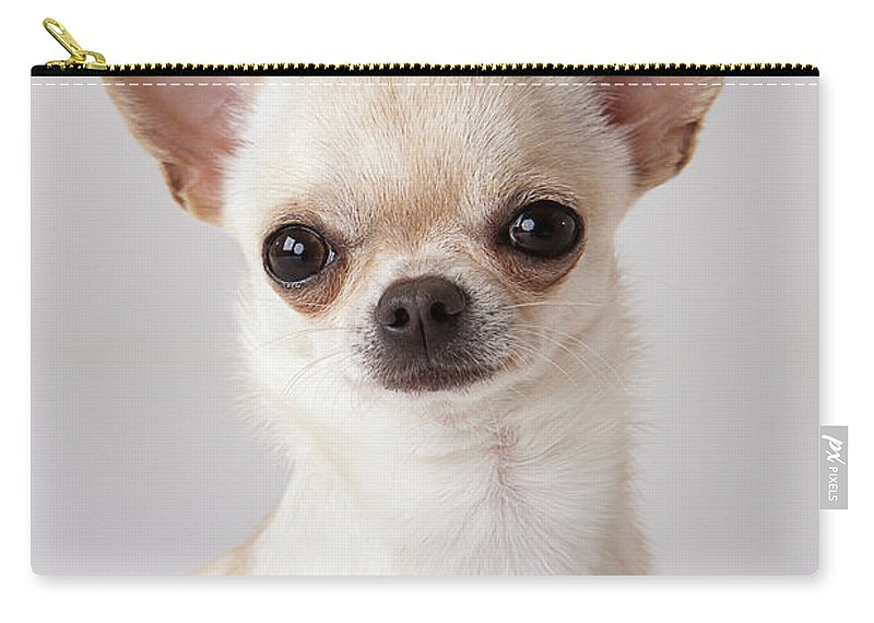 Pets Carry-all Pouch featuring the photograph Portrait Of Chihuahua by Compassionate Eye Foundation/david Leahy