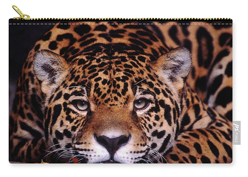 Latin America Carry-all Pouch featuring the photograph Portrait Of Jaguar, Brazil by Mark Newman