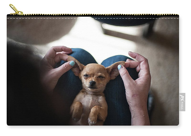 Pets Carry-all Pouch featuring the photograph Pov - Pets by Jono Winnel