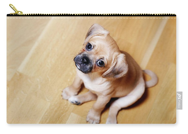 Pets Carry-all Pouch featuring the photograph Pugalier Puppy Sitting Down by Juliet White