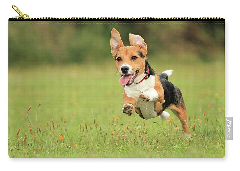 Grass Carry-all Pouch featuring the photograph Puppy by Paul Baggaley
