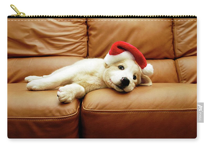 Pets Carry-all Pouch featuring the photograph Puppy Wears A Christmas Hat, Lounges On by Karina Santos