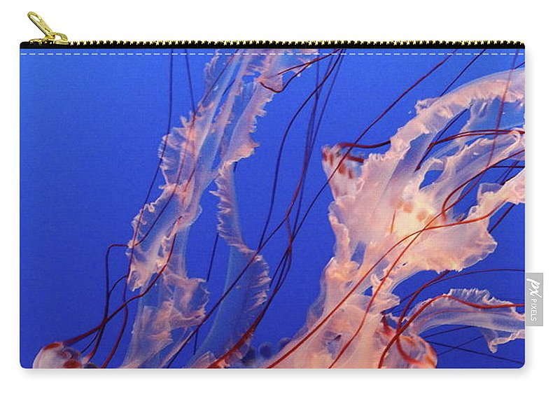 Underwater Carry-all Pouch featuring the photograph Purple-striped Jellyfish Swimming by Rich Lewis