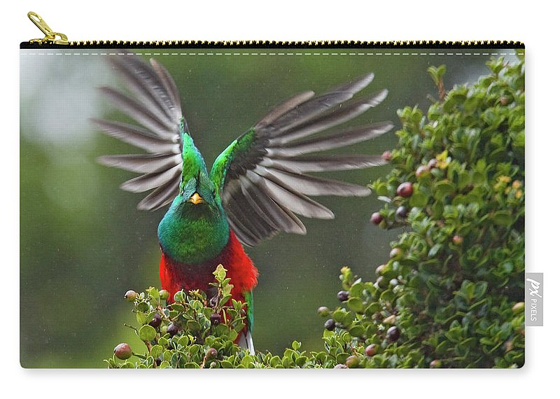 Animal Themes Carry-all Pouch featuring the photograph Quetzal Taking Flight by Photograph Taken By Nicholas James Mccollum
