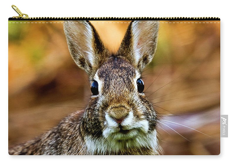 Animal Themes Carry-all Pouch featuring the photograph Rabbit by Hvargasimage