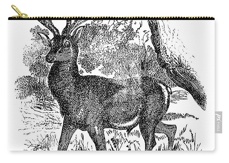 Engraving Carry-all Pouch featuring the digital art Red Deer Stag Engraving by Nnehring