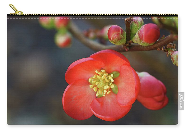 Bud Carry-all Pouch featuring the photograph Red Flowering Quince by Picture By La-ong