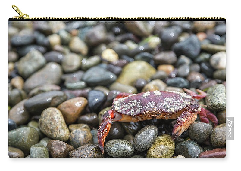 Water's Edge Carry-all Pouch featuring the photograph Red Rock Crab On A Pebble Covered Beach by Stevedf