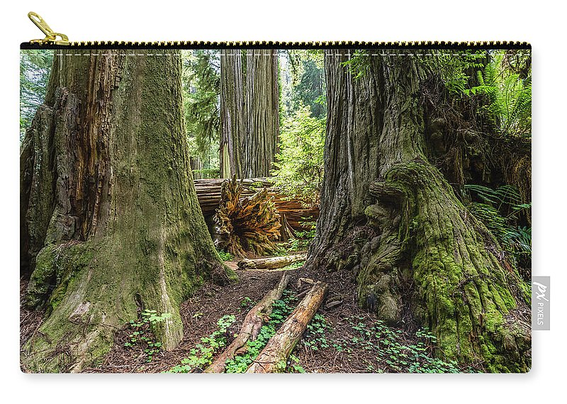 Redwood Carry-all Pouch featuring the photograph Redwoods by David Kulp