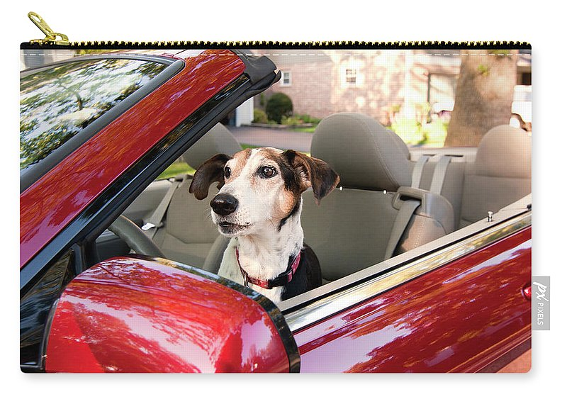 Dog Carry-all Pouch featuring the photograph Road Trip by Patty Colabuono