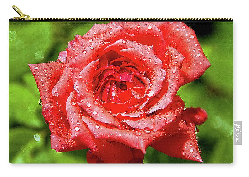 New Delhi Carry-all Pouch featuring the photograph Rose With Raindrops by Charlie Joe