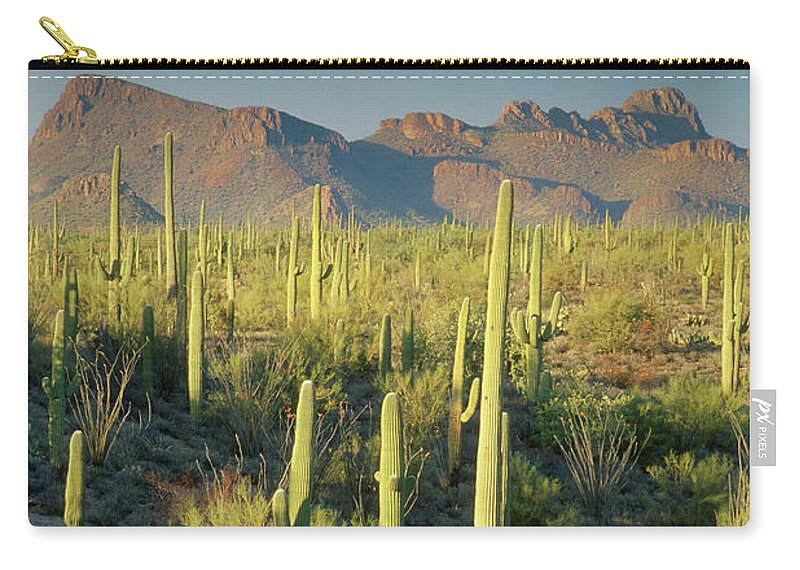 Saguaro Cactus Carry-all Pouch featuring the photograph Saguaro Cactus In Sonoran Desert And by Kencanning