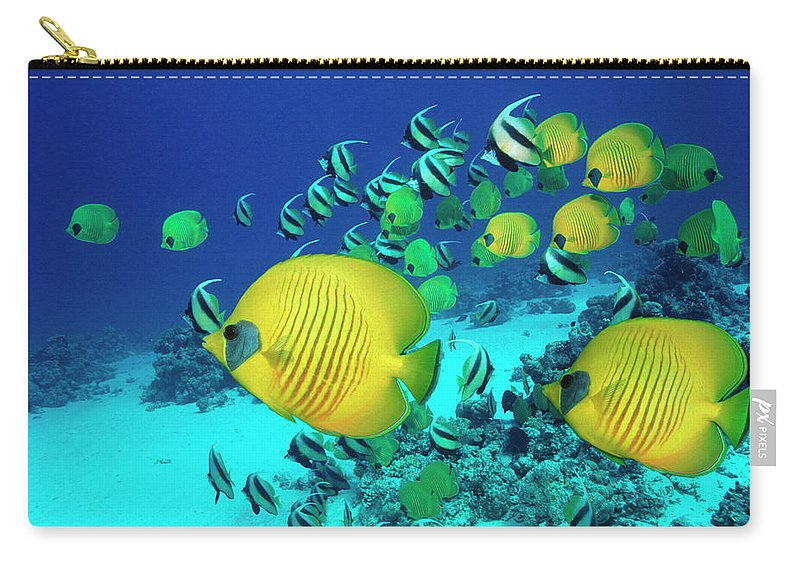 Underwater Carry-all Pouch featuring the photograph School Of Butterfly Fish Swimming On by Georgette Douwma