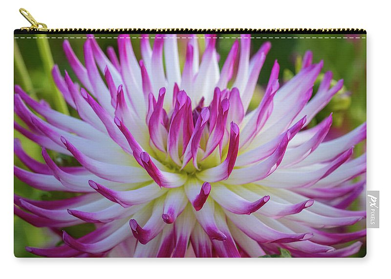 Semi-cactus Carry-all Pouch featuring the photograph Semicactus Dahlia by Catherine Avilez