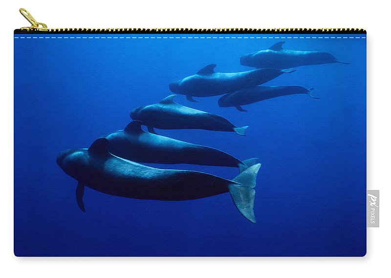 Underwater Carry-all Pouch featuring the photograph Short-finned Pilot Whales, Globicephala by Gerard Soury