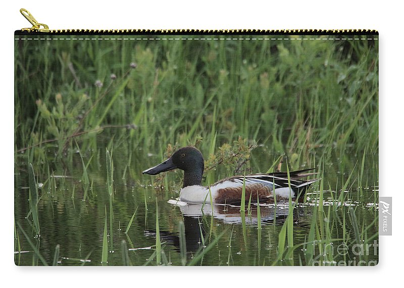 Duck. Bird Carry-all Pouch featuring the photograph Shovel Tail In Shallows by Jeff Swan