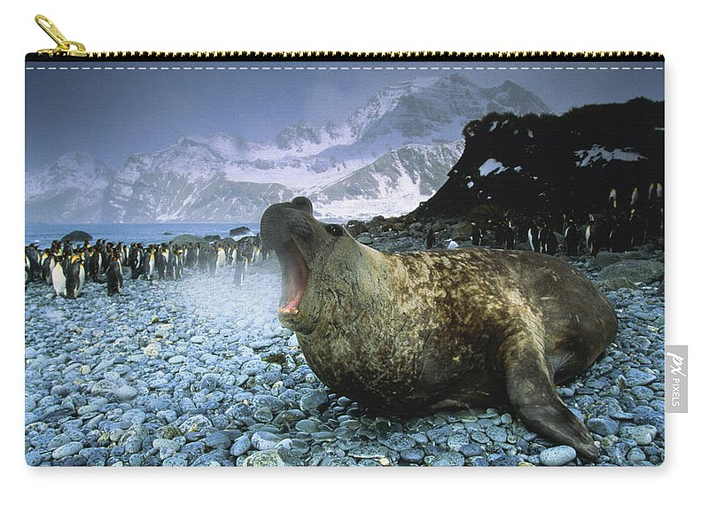 Snow Carry-all Pouch featuring the photograph Southern Elephant Seal Mirounga Leonina by Art Wolfe