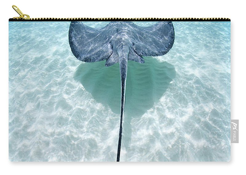 Underwater Carry-all Pouch featuring the photograph Southern Stingray Cayman Islands by Justin Lewis