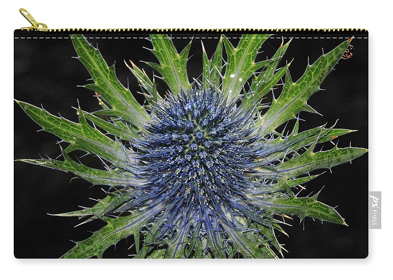 Insect Carry-all Pouch featuring the photograph Spider by Love Photography