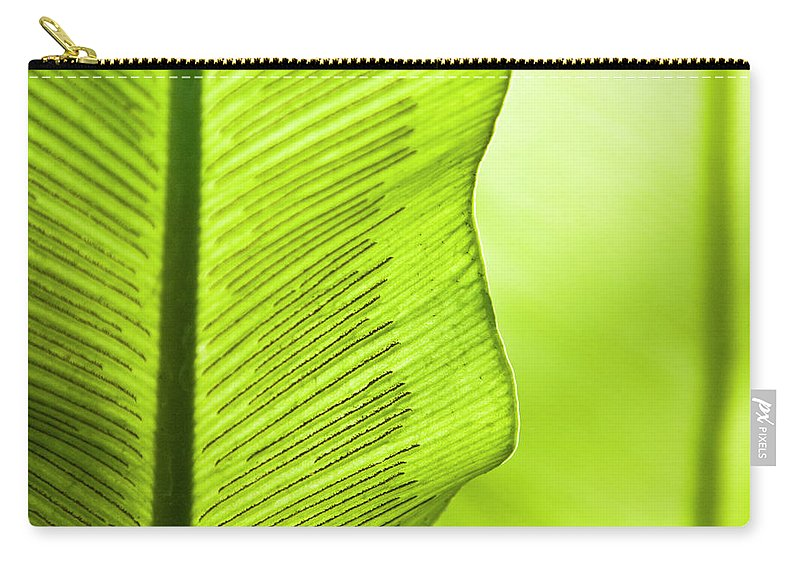 Outdoors Carry-all Pouch featuring the photograph Spores Of A Fern by By Ken Ilio