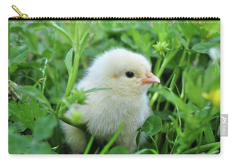 Chick Carry-all Pouch featuring the photograph Spring Chick by Charlotte Schafer