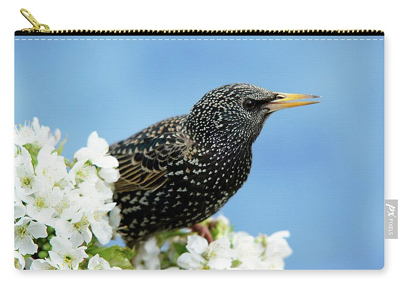 Songbird Carry-all Pouch featuring the photograph Star In Springtime by Schnuddel