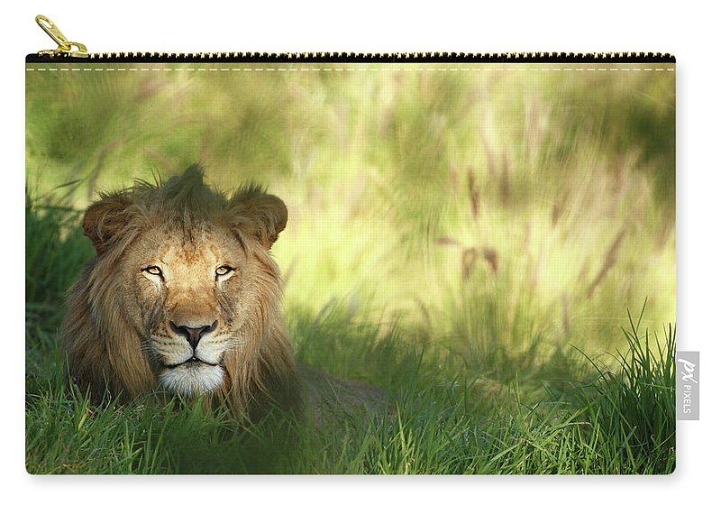 Tropical Rainforest Carry-all Pouch featuring the photograph Staring Lion In Field Of Grass With by Jimkruger