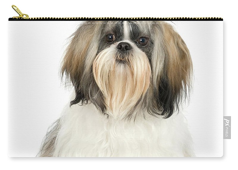 Pets Carry-all Pouch featuring the photograph Studio Portrait Of Shih Tzu Dog by Jupiterimages
