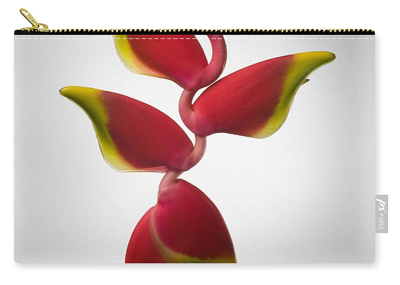 Hanging Carry-all Pouch featuring the photograph Studio Shot Of Hanging Red Lobster Claw by Design Pics/tomas Del Amo