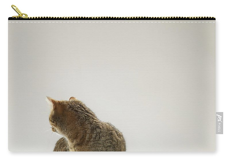 Pets Carry-all Pouch featuring the photograph Tabby Cat Looking Behind by Michael Blann