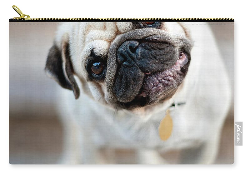 Pets Carry-all Pouch featuring the photograph Tan & Black Pug Dog Tilting Head by Alex Sotelo