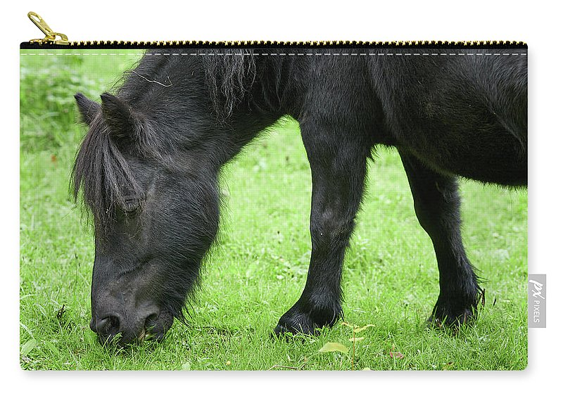 Equus Caballus Carry-all Pouch featuring the photograph The Grass Is Greener Here. The Black Pony by Jouko Lehto