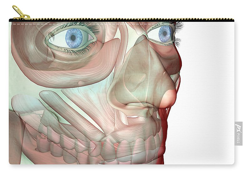 White Background Carry-all Pouch featuring the digital art The Musculoskeleton Of The Face by Medicalrf.com