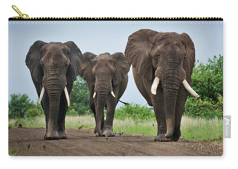 Toughness Carry-all Pouch featuring the photograph Three Big Elephants On A Dirt Road by Johansjolander