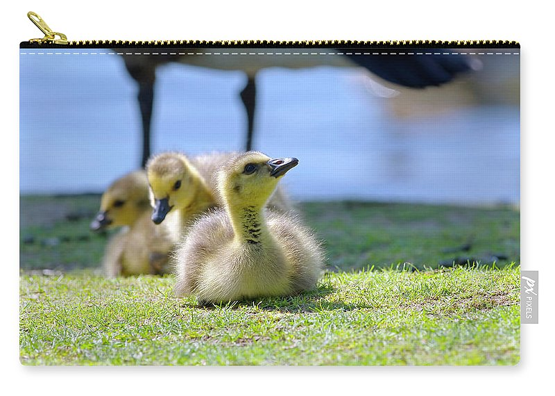 Three Goslings Carry-all Pouch featuring the photograph Three Goslings by Sharon Talson
