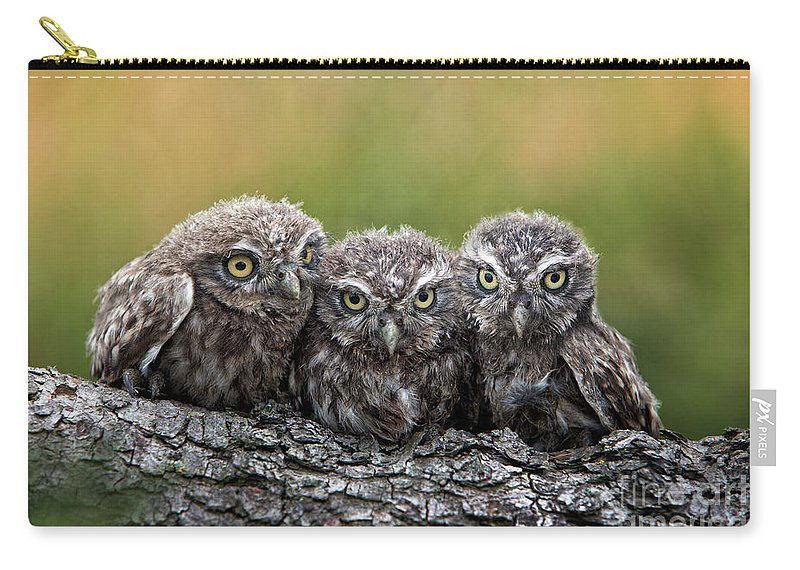 Bird Of Prey Carry-all Pouch featuring the photograph Three Grimly Goblins by Michael Milfeit