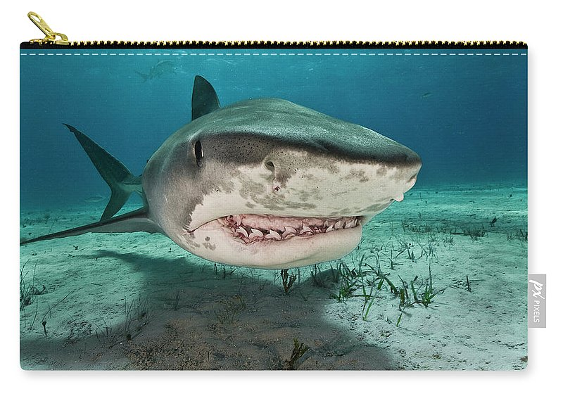 Underwater Carry-all Pouch featuring the photograph Tiger Sharks Galeocerdo Cuvier Are by Rodrigo Friscione