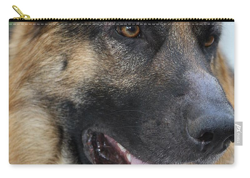 Love Carry-all Pouch featuring the photograph Timo Close-up by Cheryl Orduno