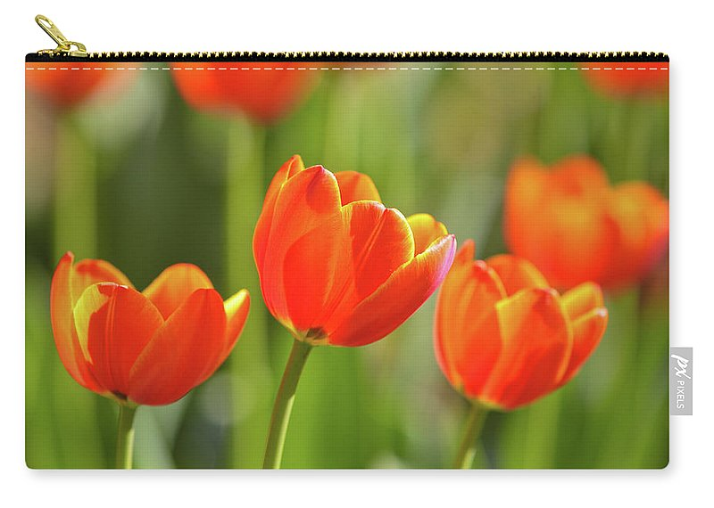 Flowerbed Carry-all Pouch featuring the photograph Tulip by Ithinksky