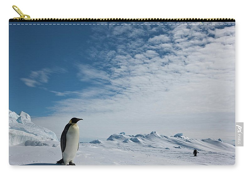Emperor Penguin Carry-all Pouch featuring the photograph Two Emperor Penguins by A Gandola