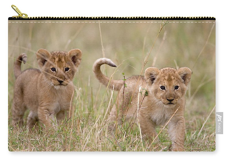 Kenya Carry-all Pouch featuring the photograph Two Lion Panthera Leo Cubs Walking by Paul Souders