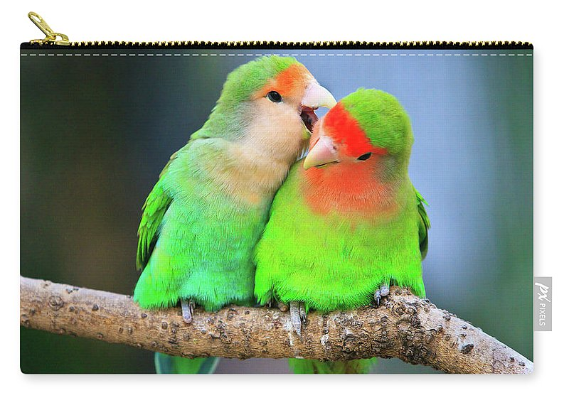 Togetherness Carry-all Pouch featuring the photograph Two Peace-faced Lovebird by Feng Wei Photography