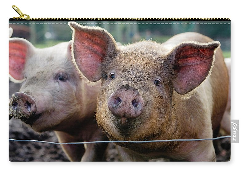 Pig Carry-all Pouch featuring the photograph Two Pigs On Farm by Charity Burggraaf