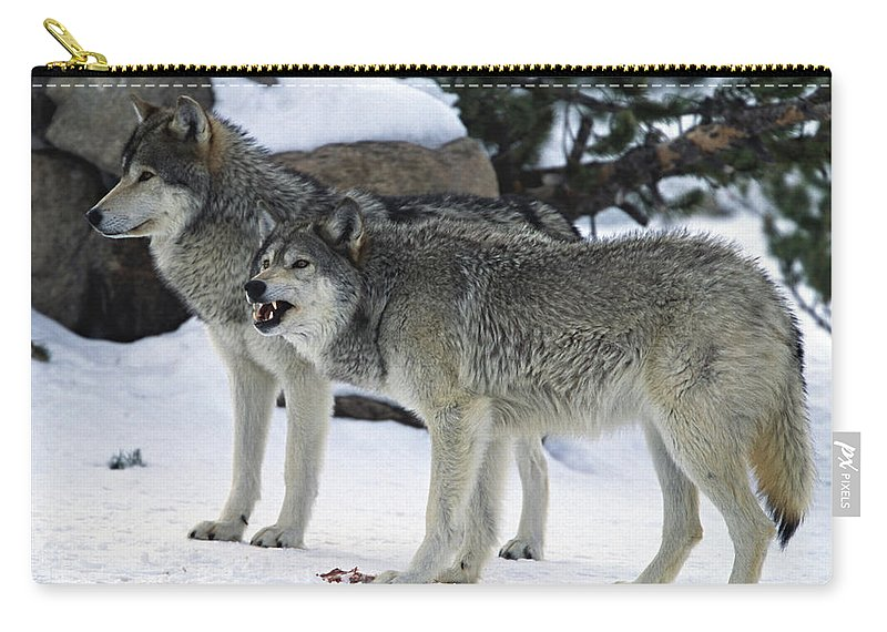 Snarling Carry-all Pouch featuring the photograph Two Wolves by Judilen