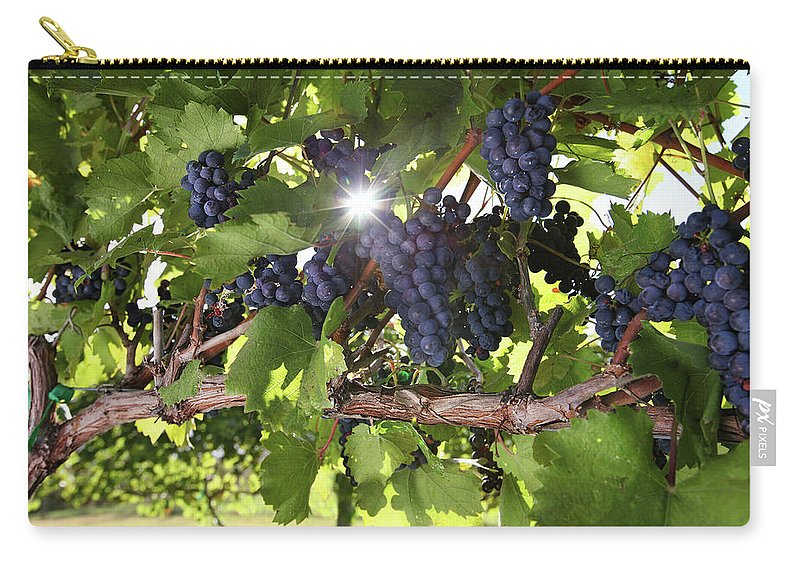 Scenics Carry-all Pouch featuring the photograph Vineyard Wine Grapes by Georgepeters