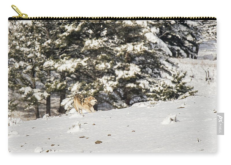 Wolf Carry-all Pouch featuring the photograph W14 by Joshua Able's Wildlife