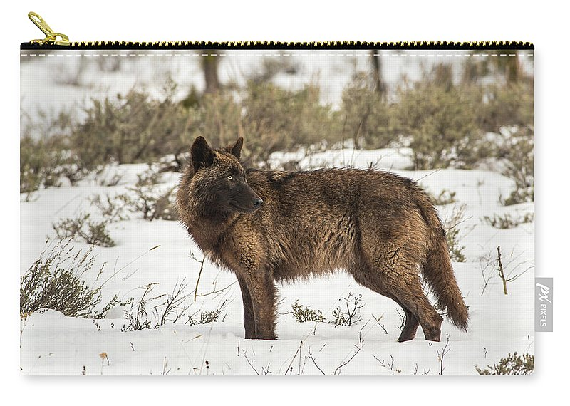 Wolf Carry-all Pouch featuring the photograph W9 by Joshua Able's Wildlife